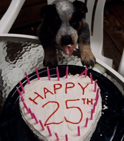 Do You Know Your Pet's Real Birth Date?