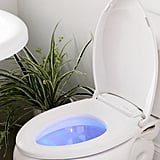 Who Knew a Toilet Could Be Such a Treat?