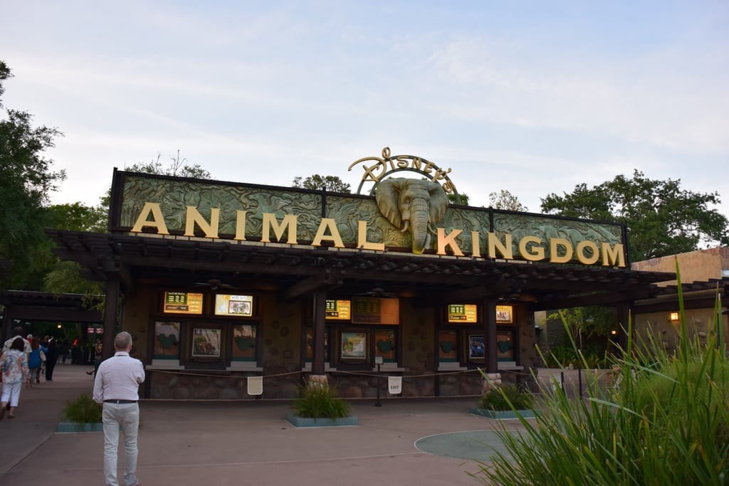 Visiting Animal Kingdom at Night