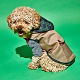 Ware of the Dog Plaid Trim Twill Dog Raincoat