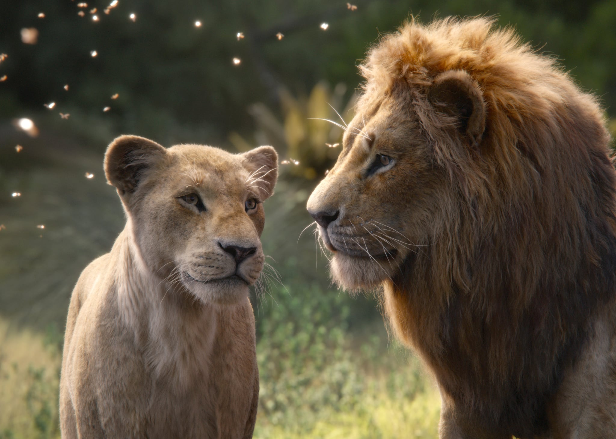 THE LION KING, from left: Nala (voice: Beyonce Knowles-Carter), Mufasa (voice: James Earl Jones), 2019.  Walt Disney Studios Motion Pictures / courtesy Everett Collection