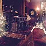 "Taylor said her cat Meredith was ""so utterly BORED by my Christmas cheer"" in the hours leading up to the party."