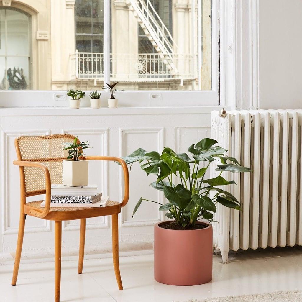 Brathwaite Ceramic Pot Planter These 21 Cool Plant Pots Will Bring So Much Joy Into Your Home Popsugar Home Photo 14