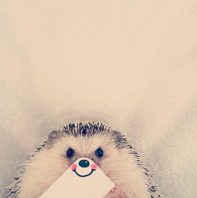 Marutaro the Hedgehog Instagram