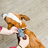 Whistle Dog and Cat GPS Tracker and Activity Monitor