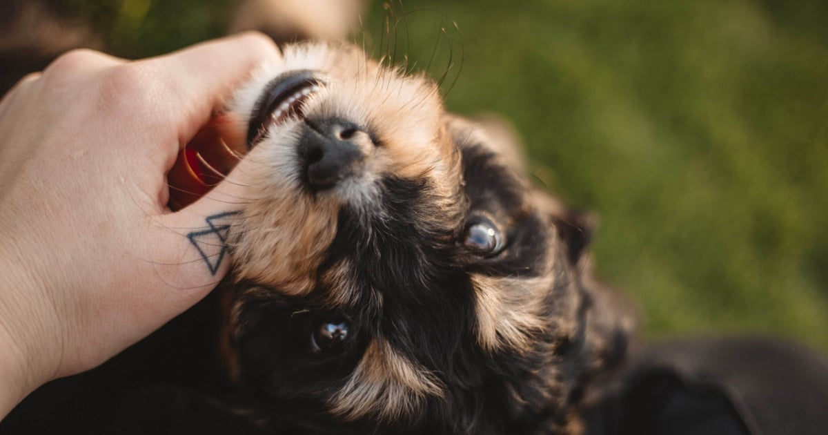 Zodiac Signs That Make the Best Pet Owners, Ranked From Best to Worst