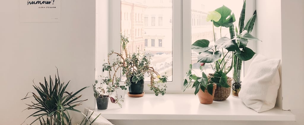 Best Houseplants For Allergy Sufferers