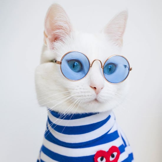 Zappa the Cat Has the Best Feline Wardrobe on Instagram