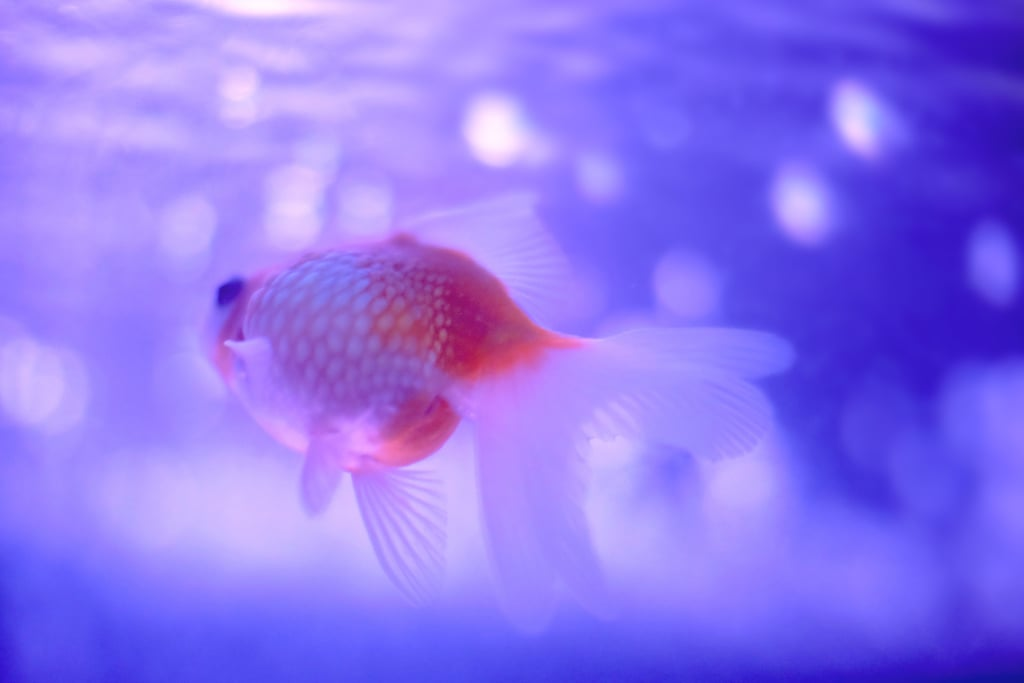 Goldfish only have a three-second memory.
