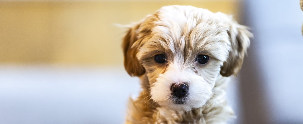 How to Create a Routine For Your Puppy