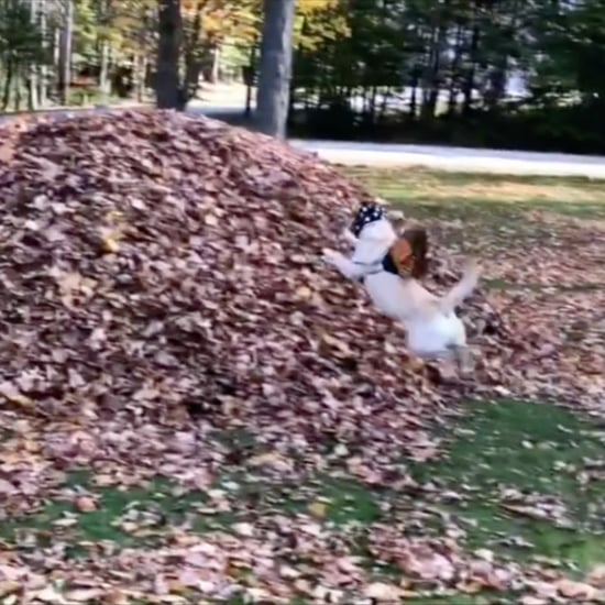Dog Who Jumps Into Leaf Piles