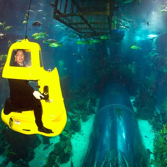 Dubai Aquarium & Underwater Zoo Introduces Shark Submarines