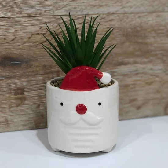 Target Australia Is Selling Adorable Christmas Succulents