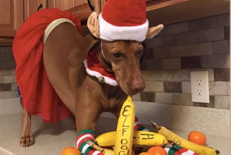 Woman Dresses Dog Up As Elf On The Shelf Popsugar Family
