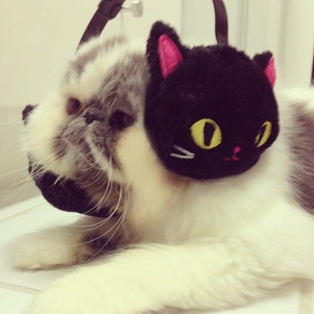 Pet of the Week: Smush-Faced Cat