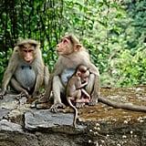Humans evolved from monkeys.