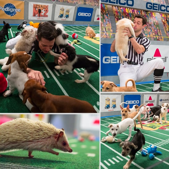 Puppy Bowl 2013 Pictures