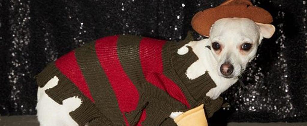 Freddy Krueger Halloween Costume For Dogs