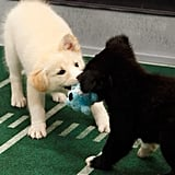 Tussle For the Ball