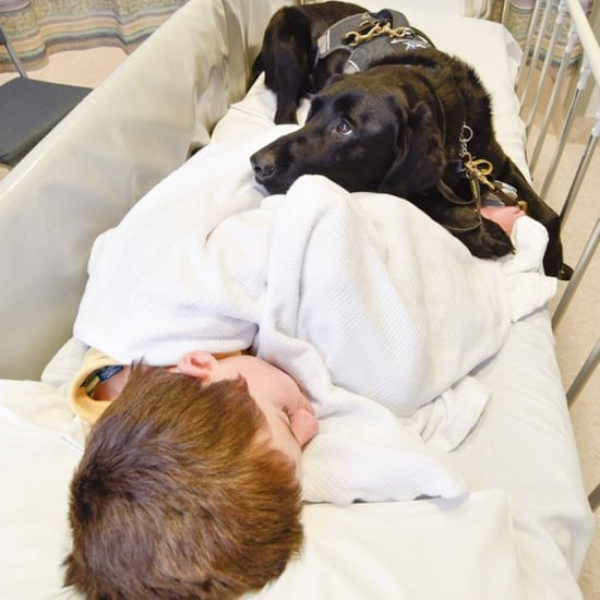 Autistic Boy's Service Dog Stays in Bed With Him at Hospital