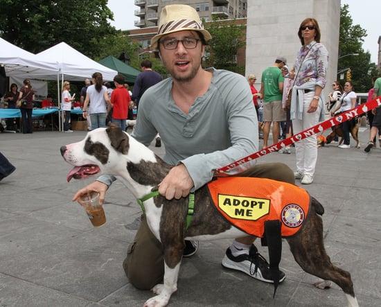 Adoptapalooza Pet Adoption