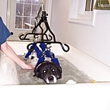 VetSystems Canine Whirlpool