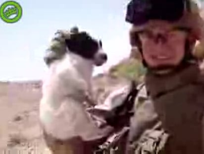Should Media Play Video of Marine Throwing Puppy Off Cliff?