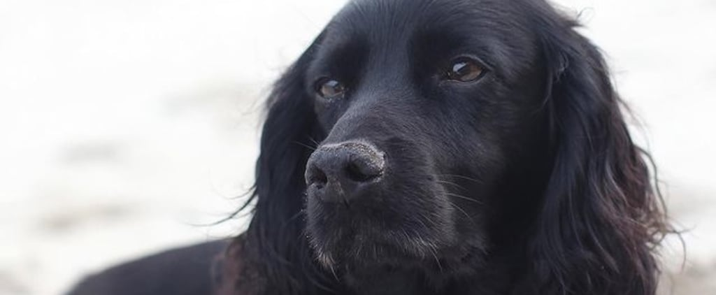 Prince William and Kate Middleton's Dog Lupo Has Died Aged 9