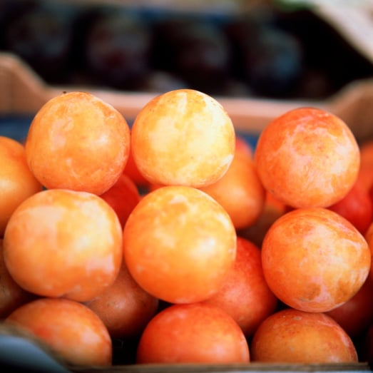 Buying and Preparing Plums