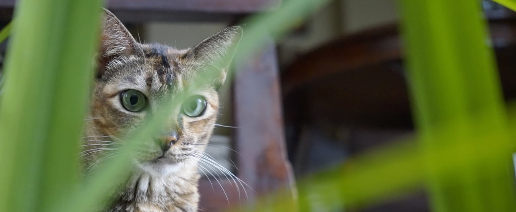 Which Plants and Flowers Are Poisonous or Toxic to Cats?