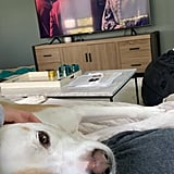 Sydney and Tank Binge Their Favorite Shows