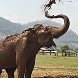 You can (and should!) visit the Elephant Nature Park just outside Chiang Mai.