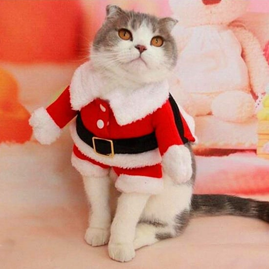 Best Gifts For Cats