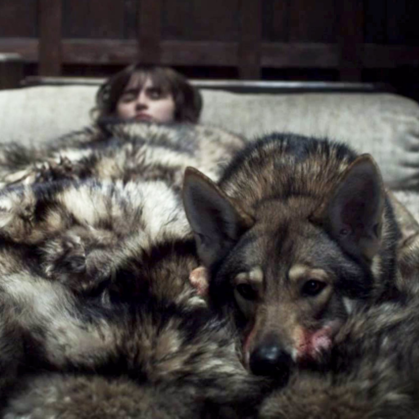 Where Are The Starks Direwolves On Game Of Thrones