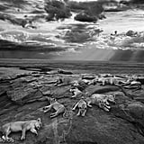 Grand Title Winner, Wildlife Photographer of the Year 2014