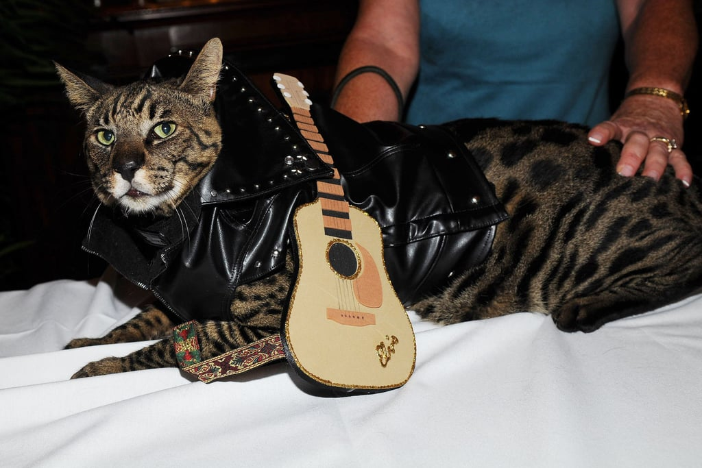 Play that Funky Music, Kitty