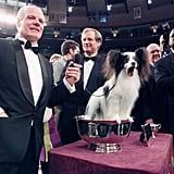 Ch Loteki Supernatural Being, a papillon, won in 1999.
