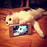 #Selfie.  Source: Reddit user Hue__Jass via Imgur