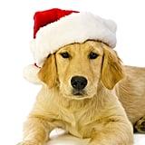 Santa's Golden Helper