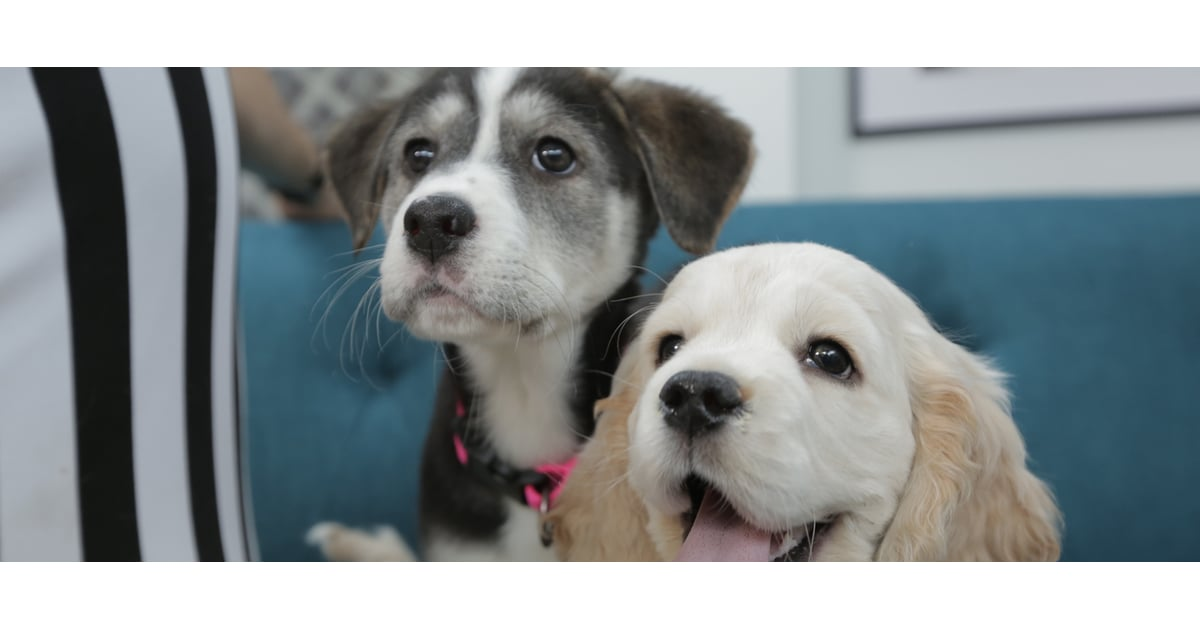 PopsugarLivingAnimal PlanetCute Dogs at the Puppy Bowl 2015 - VideoYou're Just Going to Lose Your Mind Over These Puppy Bowl CompetitorsJanuary 30, 2015 by Allie Merriam73 SharesChat with us on Facebook Messenger. Learn what's trending across POPSUGAR.This Sunday is a special day for both football- and animal-lovers: we're getting ready for the Super Bowl and the Puppy Bowl! Puppy Bowl referee Dan Schachner — and a group of four dogs cute beyond belief — visited our New York office to get fans excited about the Puppy Bowl before it airs this Sunday, Feb. 1, at 3 p.m. on Animal Planet. Join the conversationChat with us on Facebook Messenger. Learn what's trending across POPSUGAR.Animal PlanetPuppy BowlWant more?Get Your Daily Life HackSign up for our newsletter.By signing up, I agree to the Terms & to receive emails from POPSUGAR.CustomizeSelect the topics that interest you:Healthy LivingLifestylePop CultureLove and SexThanks!You're subscribed.Want more now?Follow us!Related PostsCatsThis Is What It's Re - 웹