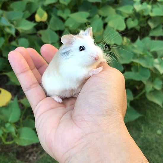 Cute Photos of the Welly Hamsters on Instagram