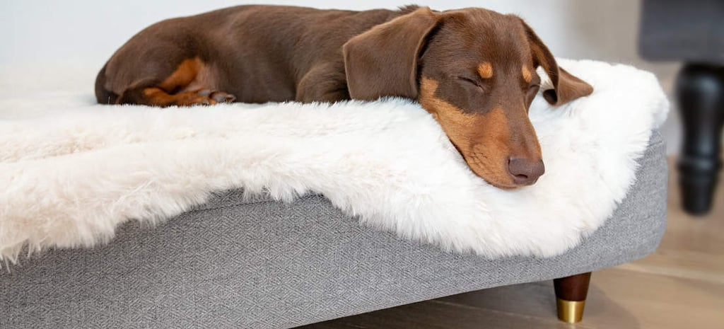 Topology Luxury Dog Bed