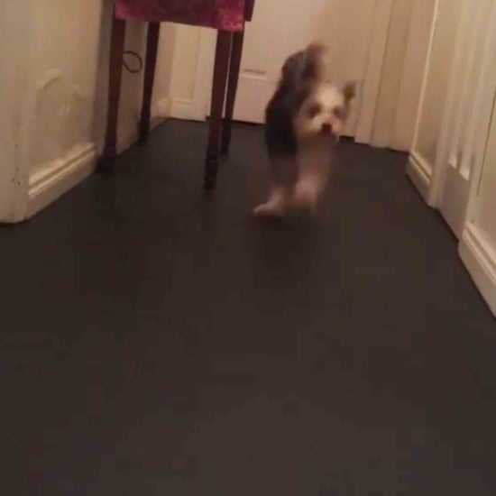 Dog That Jumps Like a Rabbit