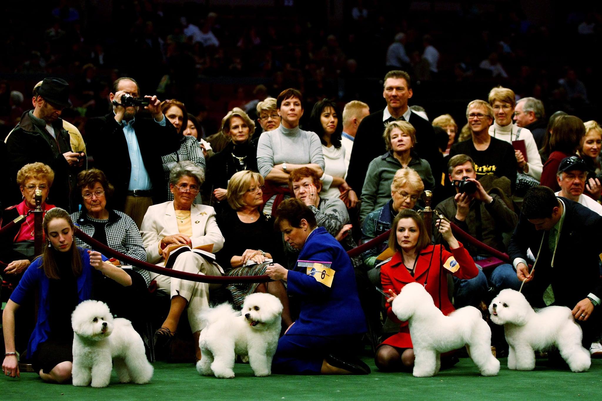Westminster Dog Show Group Order