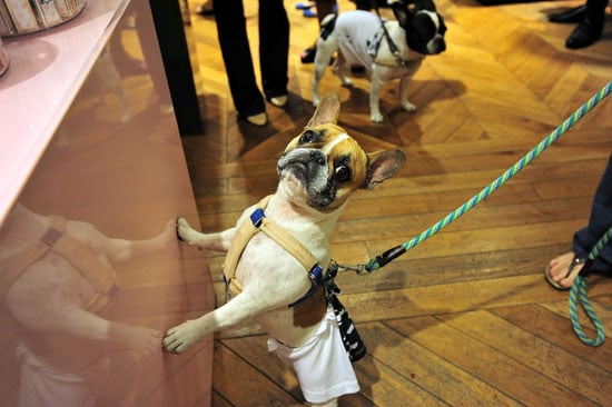 Dogs at Fashion's Night Out