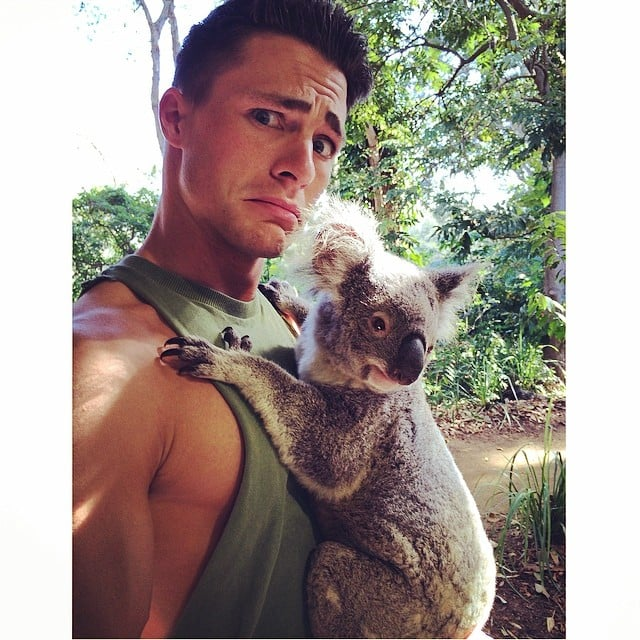 This Koala Bear