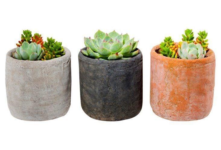 For the Plant Lover: Succulent Arrangement Trio Kit