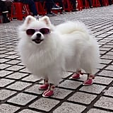 One of our editor's boyfriends snapped this canine street-style star in Taiwan. Our response? Get this dog a blog.
