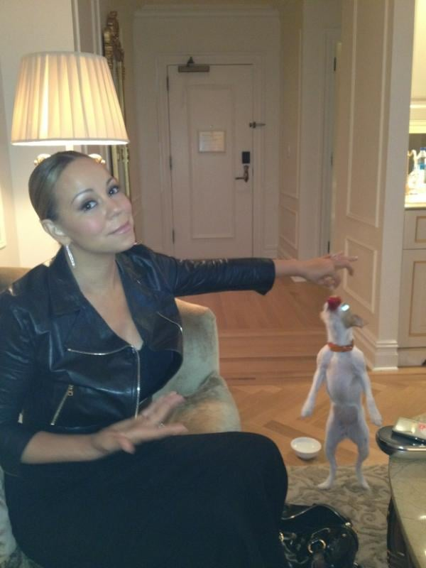 Mariah Carey discovered how much her dog loves strawberries. Source: Twitter user MariahCarey