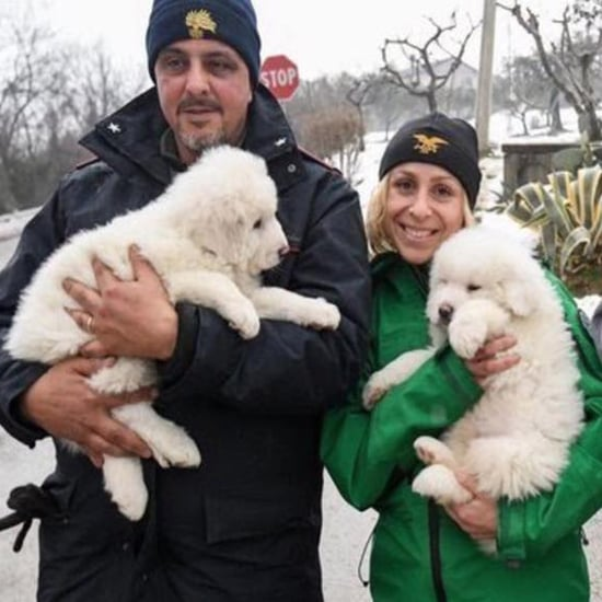 Puppies Rescued From Avalanche in Italy